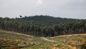 India may restrict imports of palm oil, other goods from Malaysia: Report