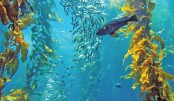 Potentials of seaweed cultivation