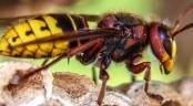 Two cousins die of hornet bite
