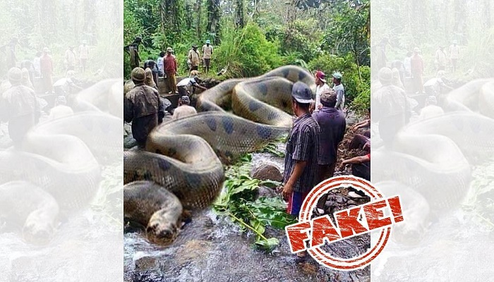 Image of world's largest Anaconda that killed 257 people is fake