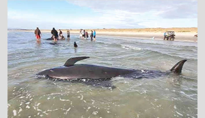 Satellites to monitor whale strandings from space