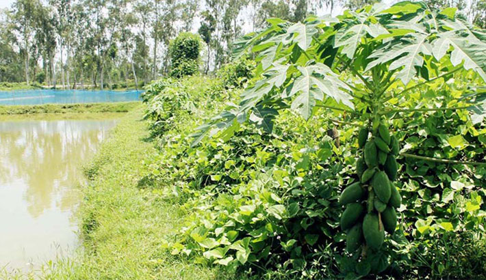 Samad succeeds in farming vegs in fisheries farms
