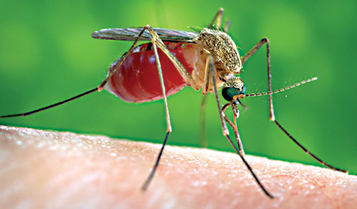 Youth dies of dengue at KMCH