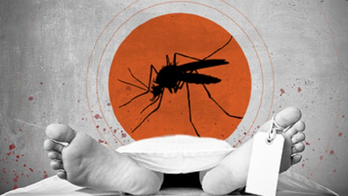 Govt confirms 104 dengue-related deaths