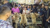 Two jailed for storing wild animal hides in Dhaka