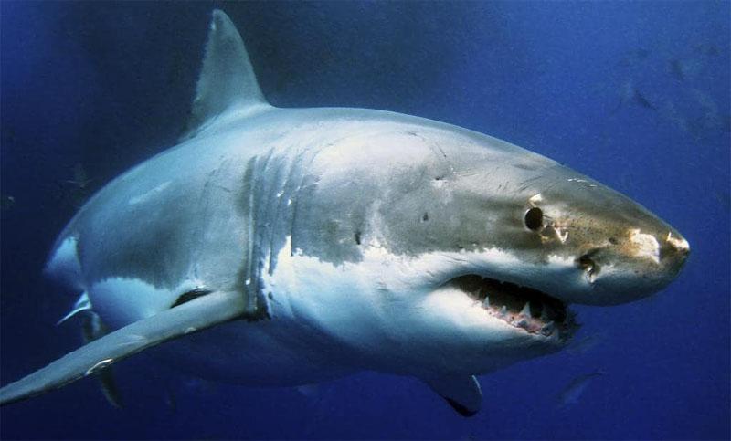 Queensland shark attack: Two British men injured at tourist spot