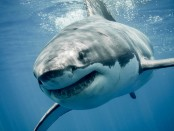 Latest Australia shark attack sparks tourism concerns