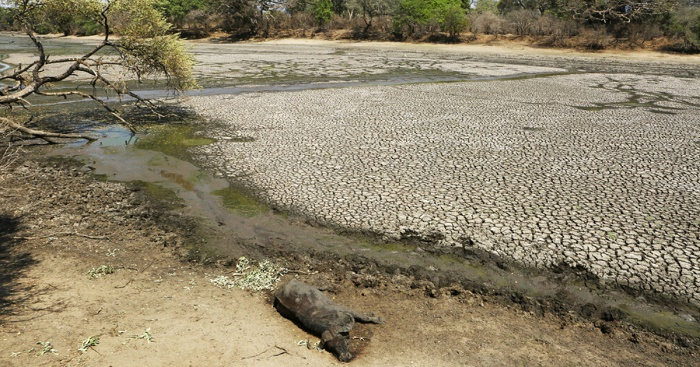 Zimbabwe's severe drought killing elephants, other wildlife