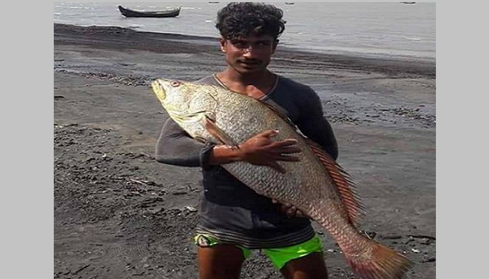 81 giant Poa fishes weighing 17-25kg sold for Tk 40 lakh