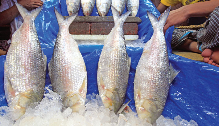 Boon in Hilsa production likely to net over 5 lakh tonnes this year