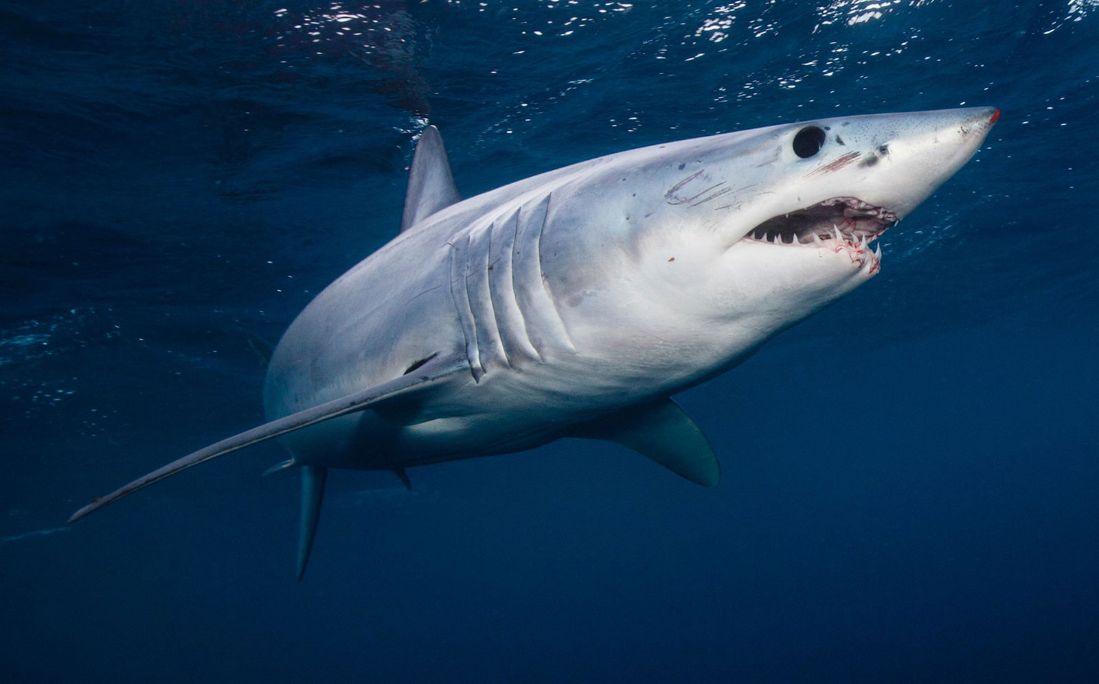 Man eaten by shark, wife identifies remains through wedding ring