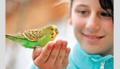 Of Budgies & Pets
