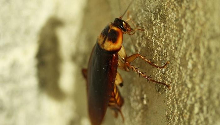 Man finds large cockroach living inside ear