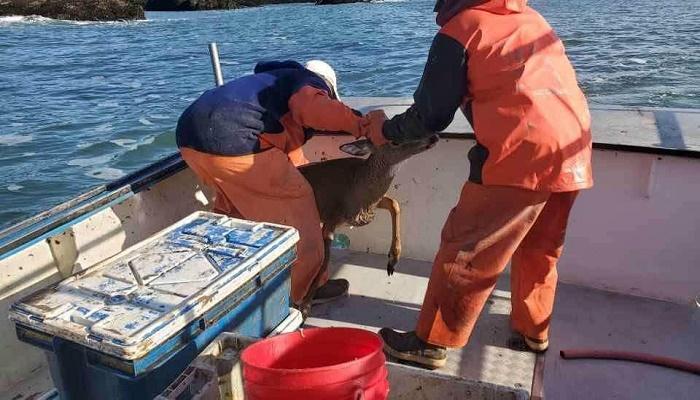 Fishermen shocked to find unlikely animal in ocean