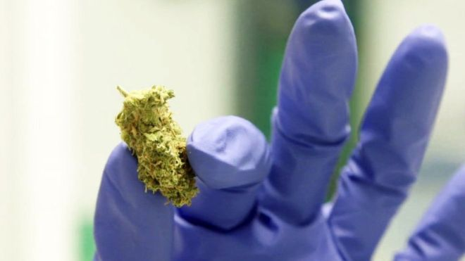 Cannabis-based medicines: Two drugs approved for NHS in UK