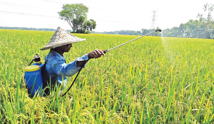 Farmer, without wearing a mask, sprays pesticide