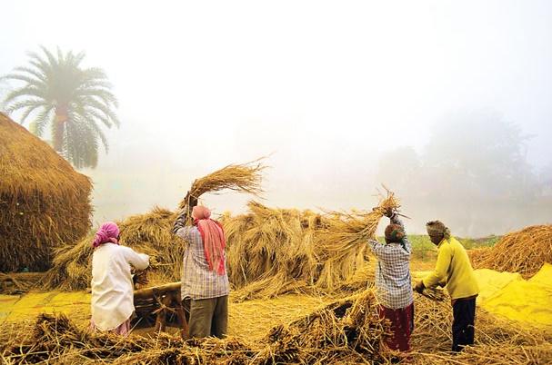 'Nabanna Utsab' being celebrated