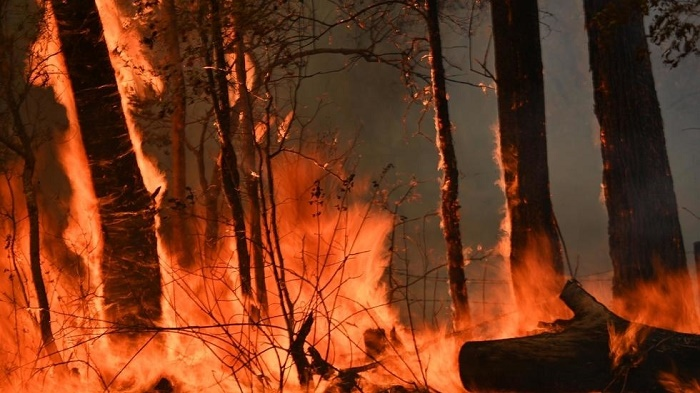 Australian man accused of starting bushfire to protect cannabis crop