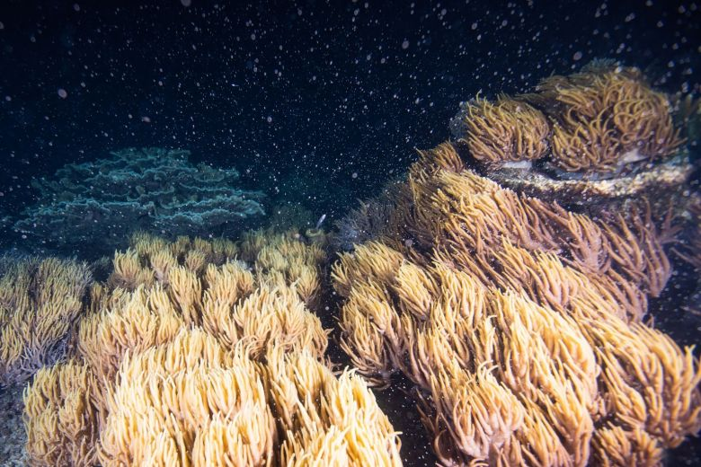 Great Barrier Reef annual mass coral spawning begins