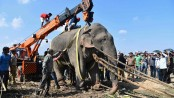 Elephant, named Usama bin Laden, dies in captivity after killing 5 villagers in India