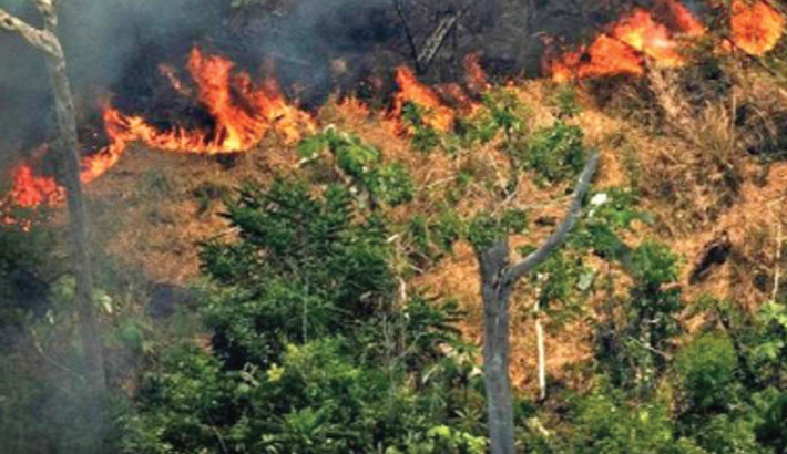 Brazil's Amazon deforestation highest since 2008