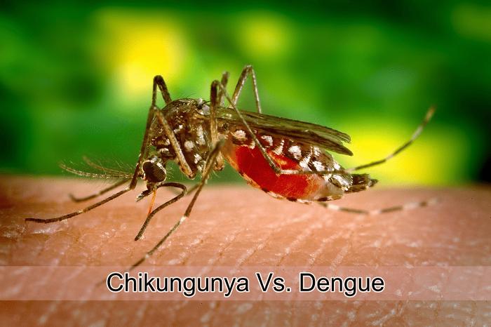 JS body for increasing preventive measures against Dengue, Chikungunya