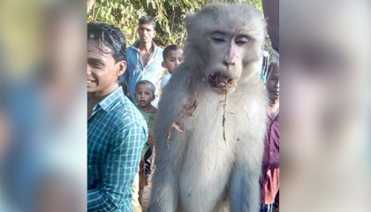 Monkey executed in people's court for 'killing' girl in Moulvibazar