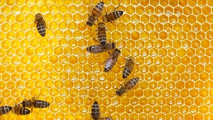 60 students injured in bee attack in India