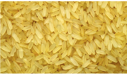 Golden Rice awaiting food safety clearance: BRRI