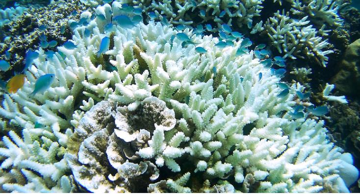 Robots deliver coral babies to help regenerate Australia's Great Barrier Reef