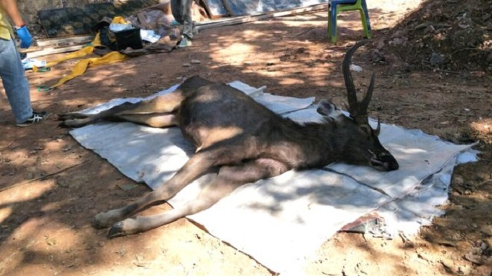 Thai deer found dead with 7kg of 'plastic bags' in stomach