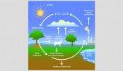 Effects of fossil fuel on life