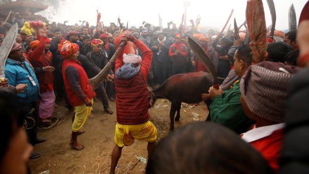 Gadhimai: Nepal's animal sacrifice festival goes ahead despite 'ban'
