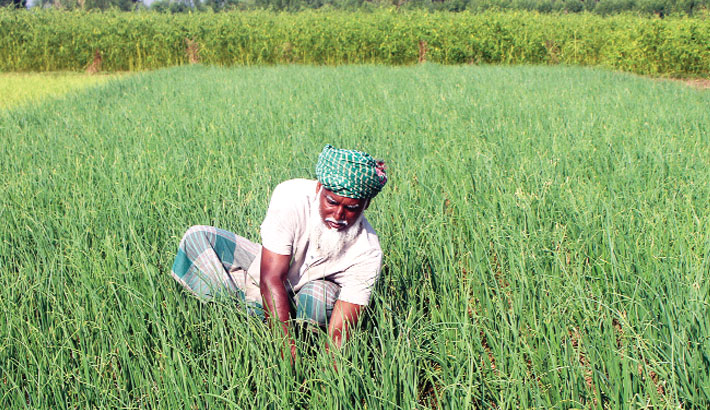 Farmer is weeding his land