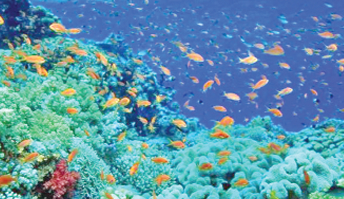Oceans running out of oxygen as temperatures rise