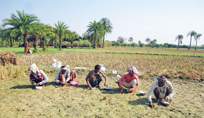 Some farmers are busy sowing garlic seeds