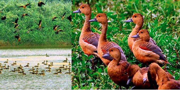 Migratory birds start arriving in the country