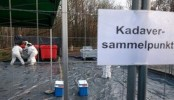 Germany on alert as swine fever nears border