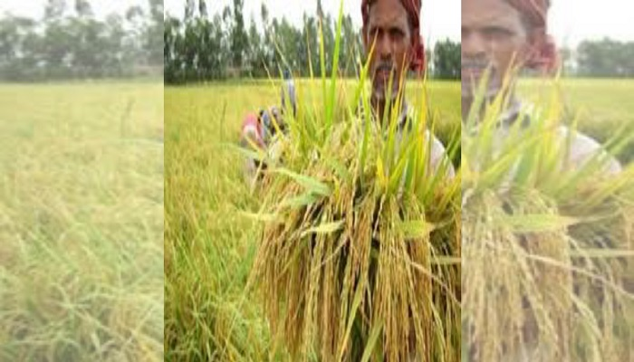 Paddy procurement process in Jashore goes digital