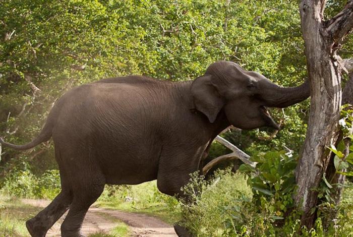 Farmer killed in elephant attack