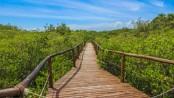 A paradise Island with hardly any escape: Brazil's Ilha do Cardoso