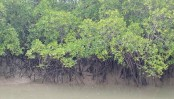 Move to save Sundarbans from pollution