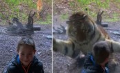 Chilling video of tiger charging at boy