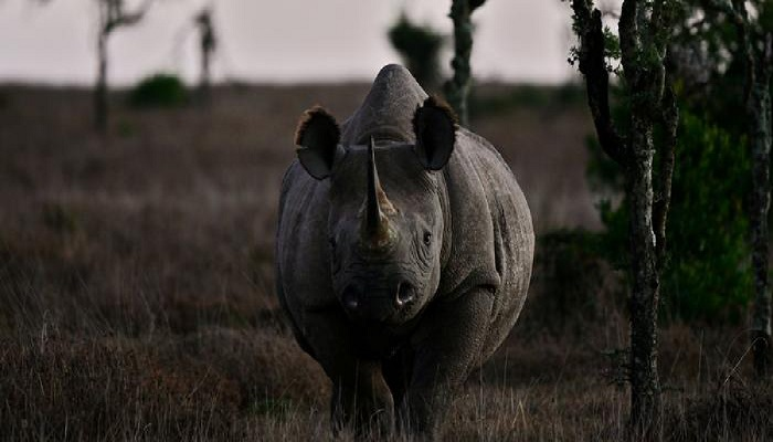 World's oldest female black rhino dies in Tanzania: official