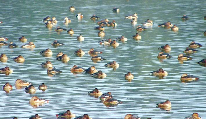 Nilsagor at Nilphamari: A Safe Sanctuary for Guest Birds