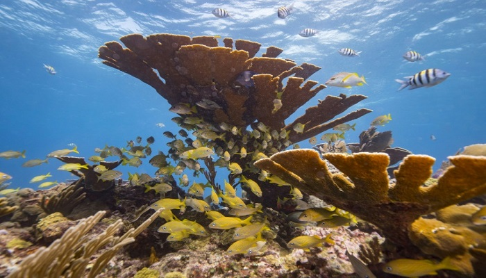 Palau bans 'reef-toxic' sunscreen