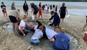 Seven whales rescued from mass stranding in New Zealand
