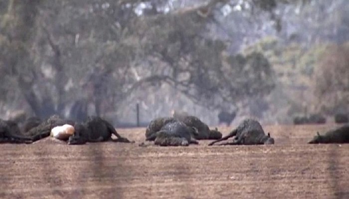 Wildfires threaten unique critters on Australian 'Galapagos'