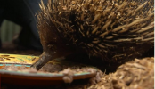 'Nothing left' for animals after bushfires