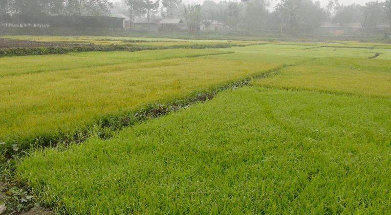 Cold threatens crops